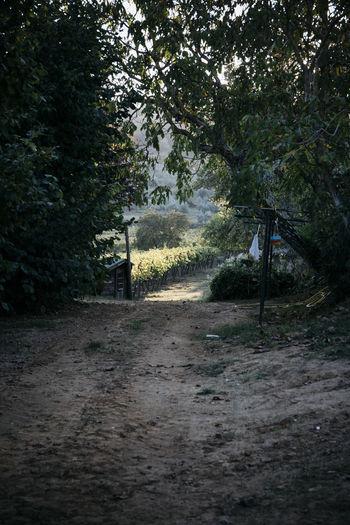 Dirt road Tree