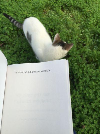Cat No People Books ♥ First Eyeem Photo