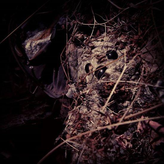 Shreddy Bear Teddybear Childhood Infancia Osito badfeeling forest old