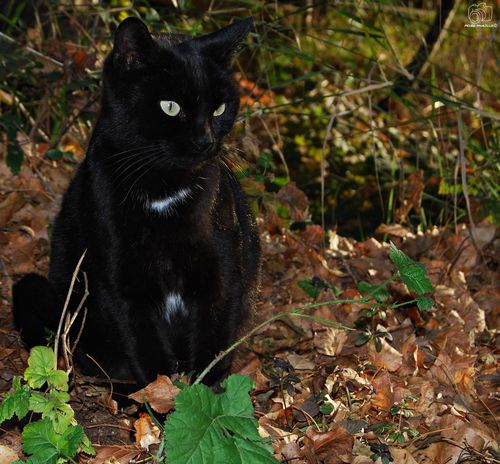 Cat Cat♡ Cats Feline Gato Gatos Nature Natura Naturaleza Naturaleza🌾🌿 Animal Animal Themes Animals NikonD60 Martorell Catalunya Looking At Camera BLackCat One Animal Black Color No People Animal Themes Outdoors Nature Plant Mammal Animals In The Wild Day Close-up Leopard