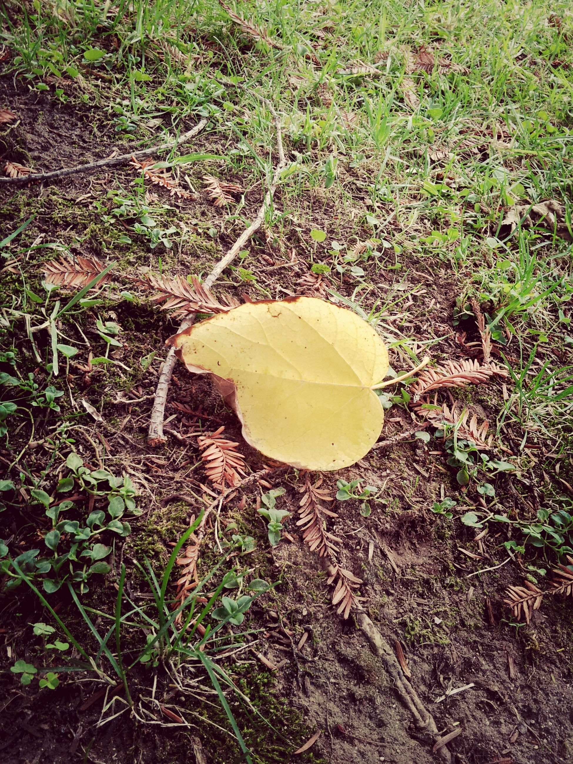 grass, leaf, high angle view, field, nature, dry, growth, yellow, autumn, fallen, green color, plant, grassy, day, ground, outdoors, change, no people, tranquility, leaves