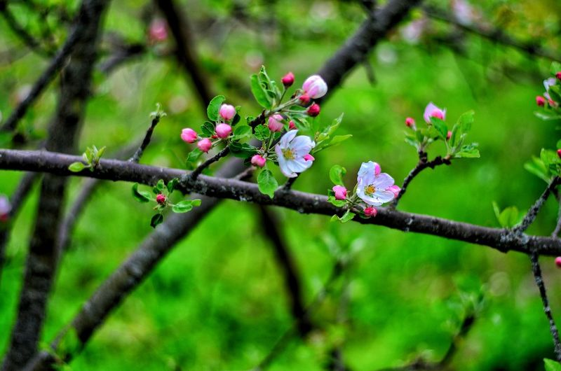Nature Flower Green Color Tree Branch Growth Fragility No People Outdoors Beauty In Nature Twig Day Springtime Focus On Foreground Red Close-up Pink Color Plant Freshness Flower Head Adults Only Landscape Portrait City Life Beard