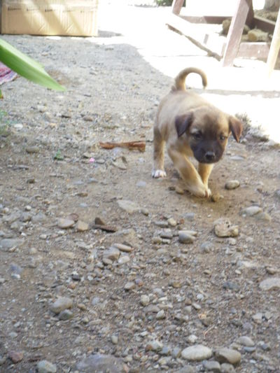 Portrait of puppy dog on land