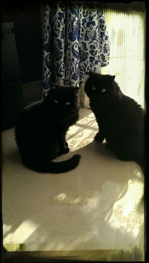 My Cats sasha and Tchimon loving the sun!