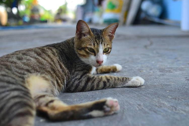 Close-up portrait of cat lying on floor