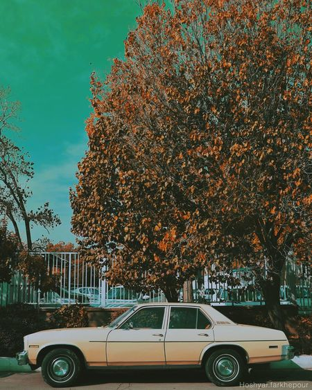 Tree Car Transportation Mode Of Transport Land Vehicle Growth EyeEmNewHere Day Outdoors No People Branch Nature Beauty In Nature Leaf Architecture Sky First Eyeem Photo