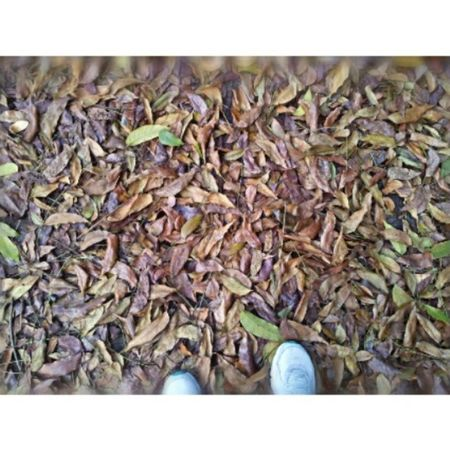 Day 34: Walking alone Today isn't a great day for me. Just one of those days when I feel lost and I start questioning where exactly my life is going coz the things I wanted aren't happening. This walk helped. Seeing the beauty of nature made me realize that I might not have everything I want but in the very end I don't really need much to be happy. I am greatful. I am blessed. God's plan is better than my disappointments. 100happydays Nature Philippines Filipinosbelike idontneedmuch god thankful life