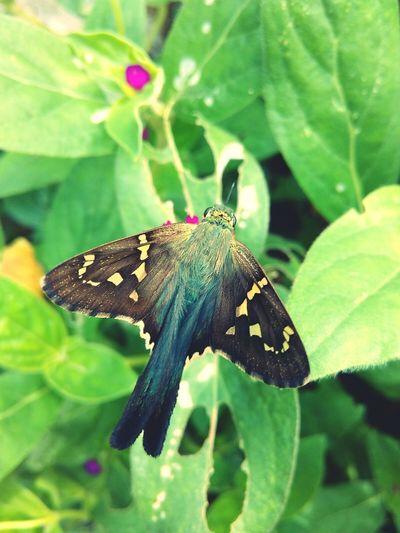 Bu Butterfly Flower Beauty In Nature One Animal