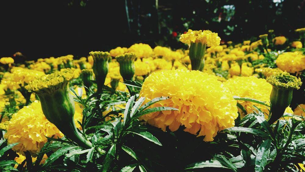 Flower Spring Flowers Springtime Vietnamese