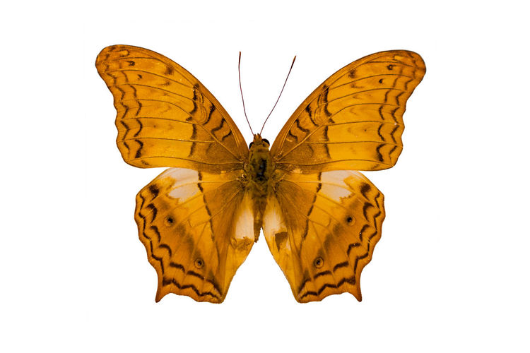 High angle view of butterfly over white background