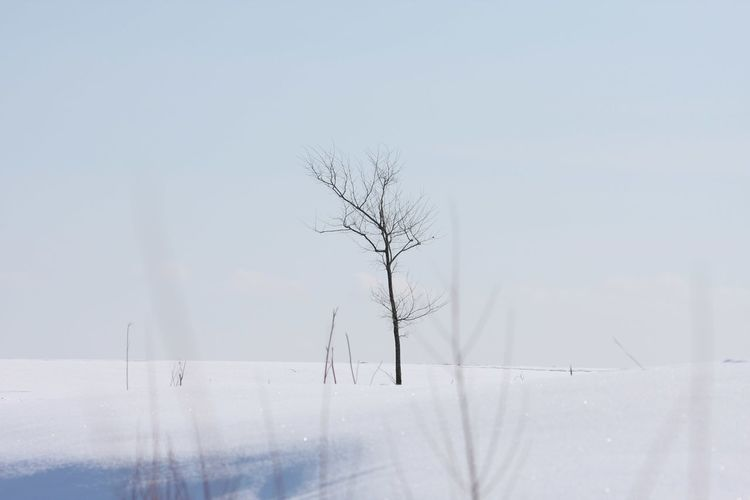 Peaceful Peace And Quiet Snow Winter Cold Temperature Nature Fog Snowing Frozen Forest Outdoors No People Frost Morning Weather Beauty In Nature Tranquil Scene Landscape Tree Day Ice Scenics