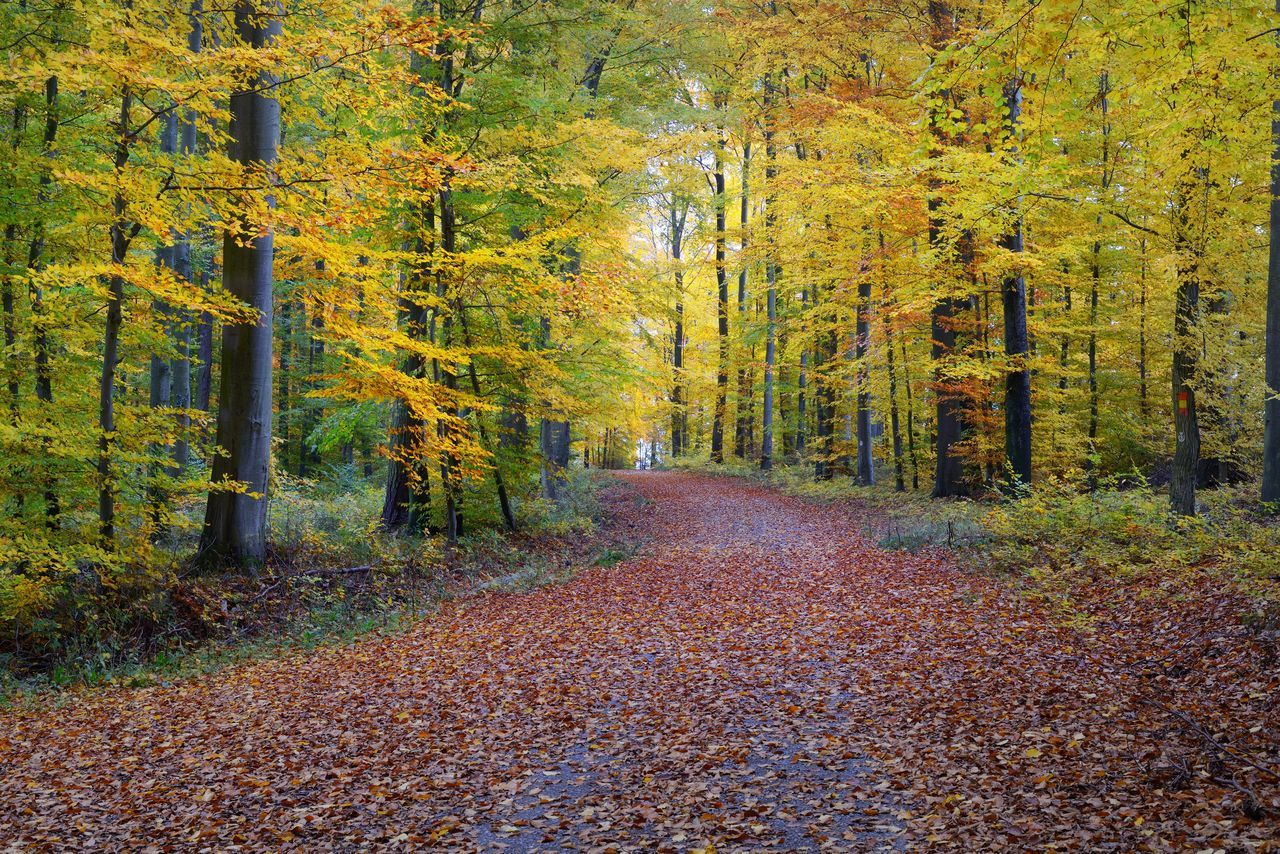 VIEW OF AUTUMNAL TREES IN FOREST