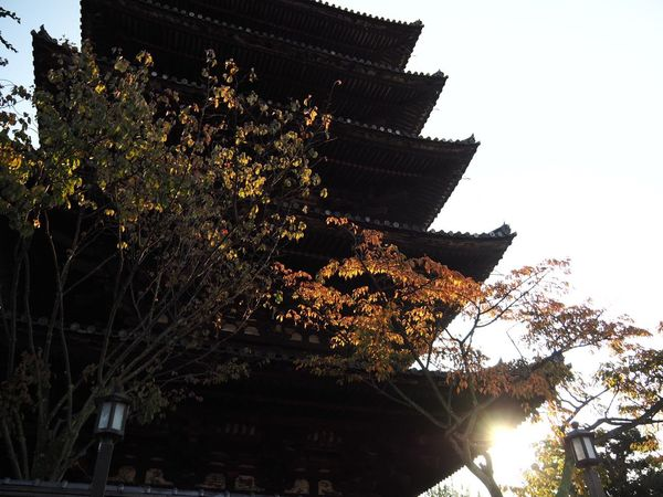 Kyoto Japan ASIA Higashiyama Yasaka-no-to Tower Early Morning Sunlight Low Angle View Outdoors Architecture Sky Autumn Leaves Autumn Olympus PEN-F
