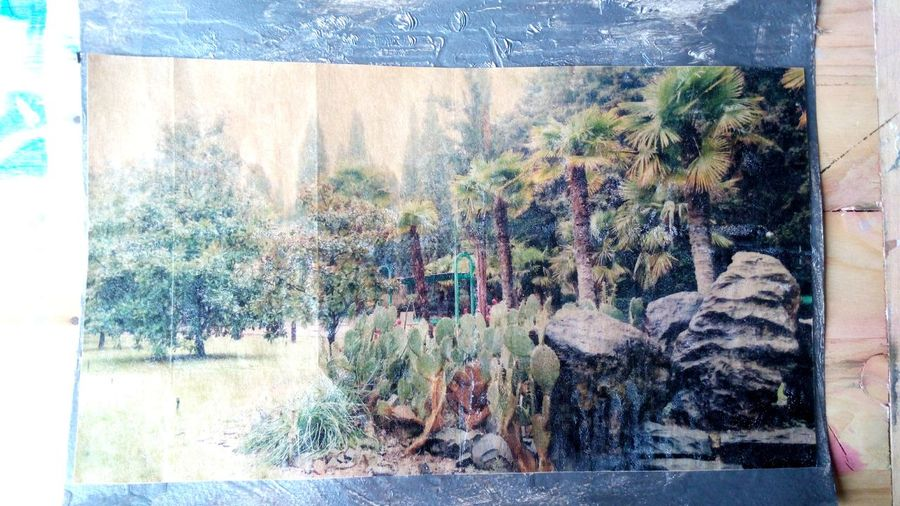 Алуштинские пальмы Art Transfer