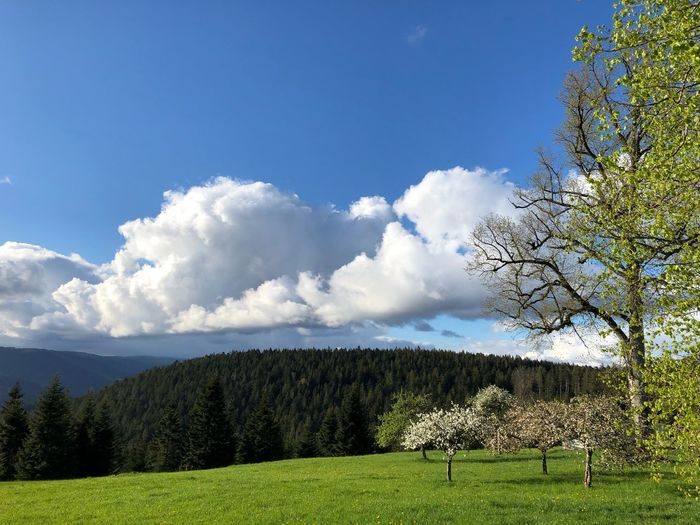 Plant Sky Tree Cloud - Sky Beauty In Nature Growth Stay Out Green Color No People Landscape Grass Nature
