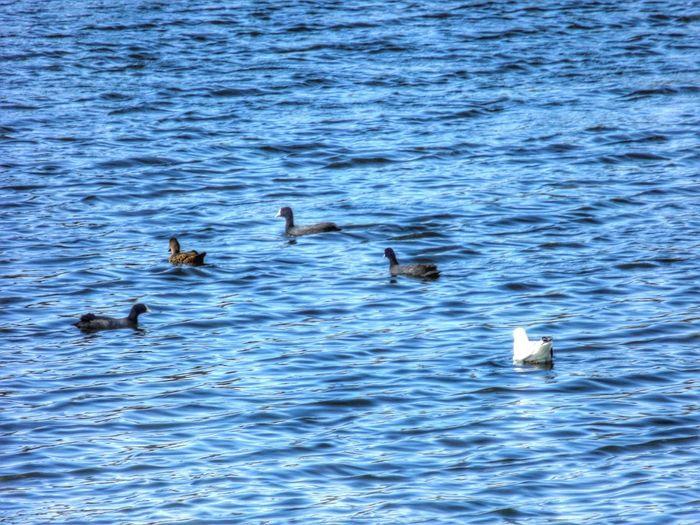 Water Enjoying The Sun Lake Birds