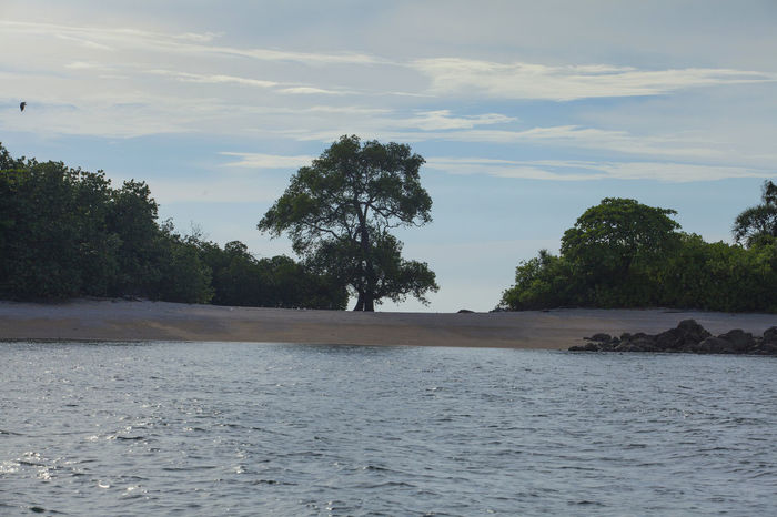 The Beach with the tree INDONESIA Jemur Island Beach Beauty In Nature Day Landscape Nature No People Outdoors Sandbeach Scenics Sea Sky Tranquil Scene Tranquility Tree Water Waterfront