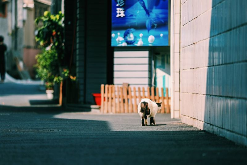 Dog on street against building in city