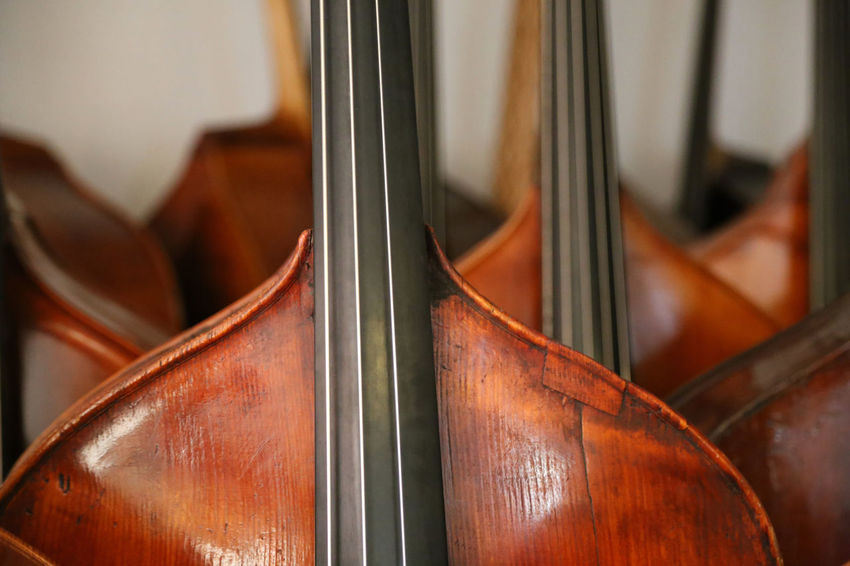 Lots of double basses at a luthier's Brown Close-up Day Indoors  Music Musical Instrument No People Arts Culture And Entertainment Violin Musical Instrument String String Instrument String Bass Double Basses Double Bass Bassbauer Luthier Kontrabass Jazz Strings Of Music Instrument Maker Classical Music Indoors