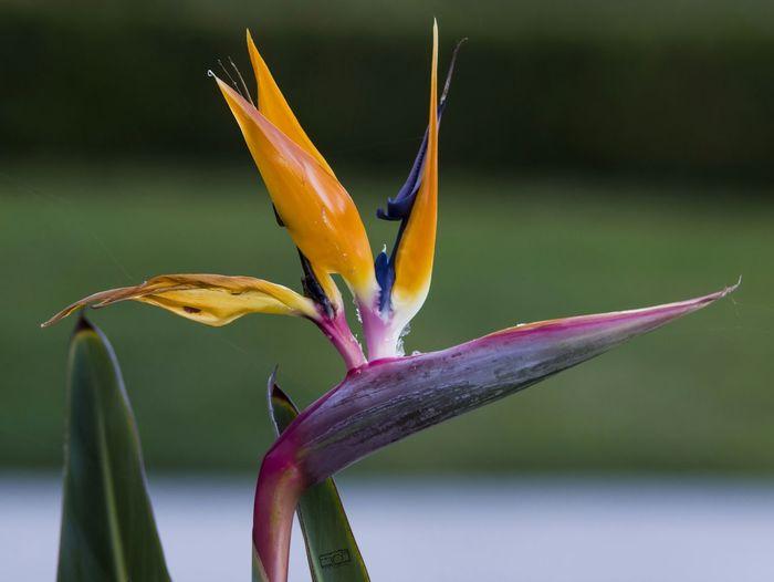 Nature Photography Birds Of Paradise Eyemnaturelover Nature