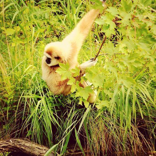 Schönbrunn Zoo Monkey