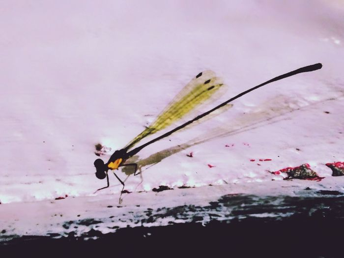Dragonfly Insect Animal Wildlife Nature Fragility