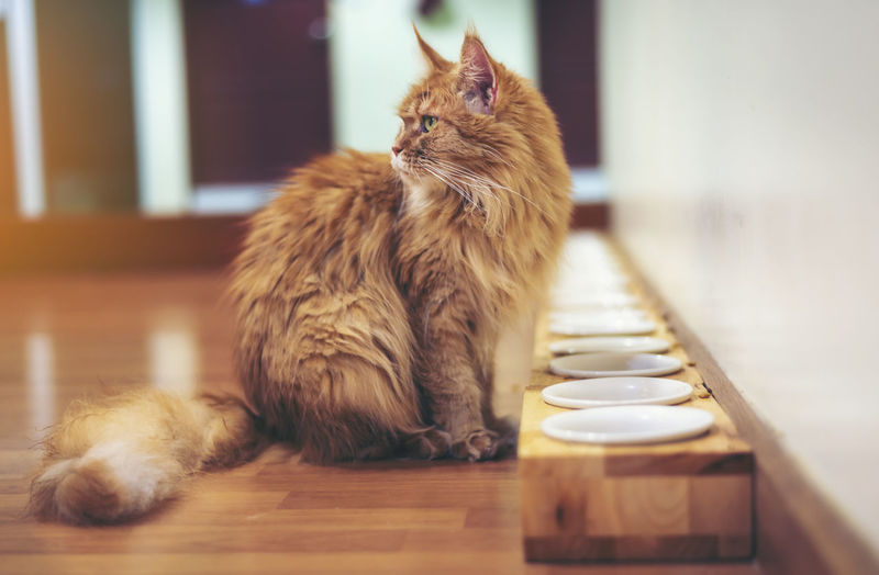 Cat sitting by plates on floor at home