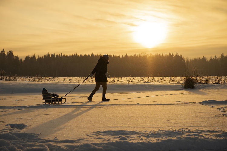 Father is pulling child on sled walking on frosty winter day outdoors. beautiful evening sunlight.