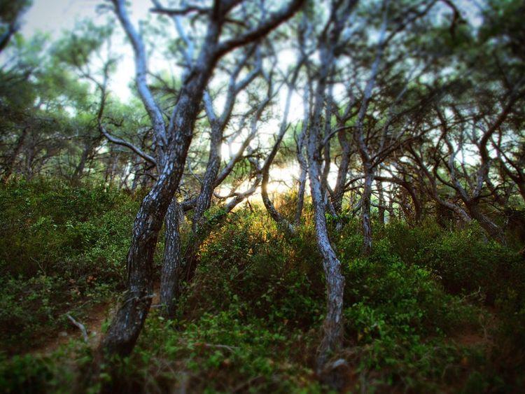 Nature Nature_collection Trees Sun And Trees Forest Morning Mediterranean  Quiet Peaceful