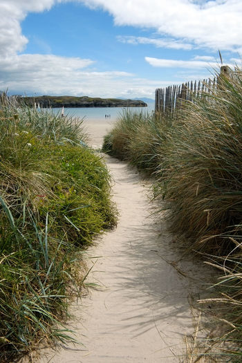 Sky Plant Water Cloud - Sky Grass Tranquility Beauty In Nature Nature Tranquil Scene Scenics - Nature Growth Day Land No People Footpath Beach Non-urban Scene Outdoors Sea Marram Grass Timothy Grass Wooden Post