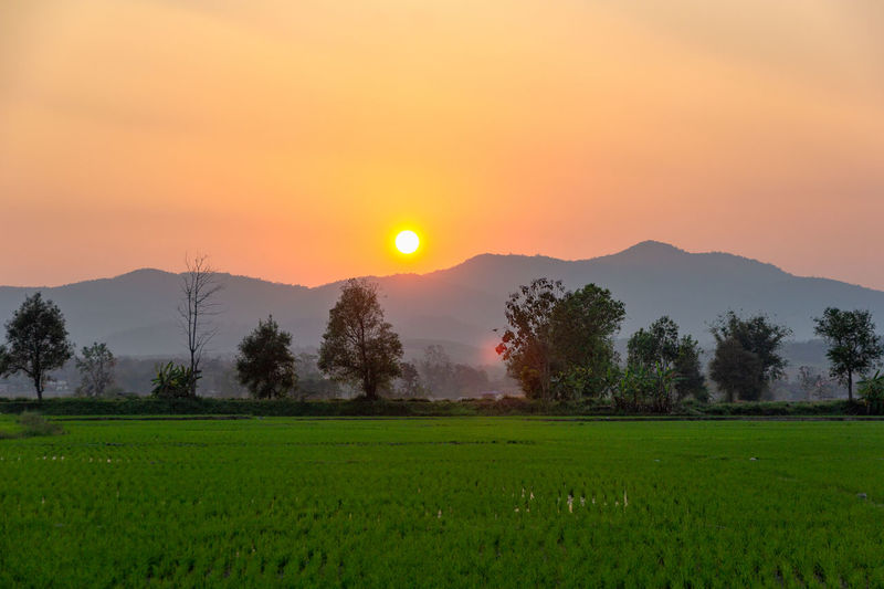 Landscape of Green rice field with mountain on background in sunset Scenics - Nature Beauty In Nature Sunset Landscape Tranquil Scene Tranquility Sky Plant Environment Field Green Color Growth Land Rural Scene Tree Idyllic Sun Orange Color Mountain Nature No People Outdoors Plantation