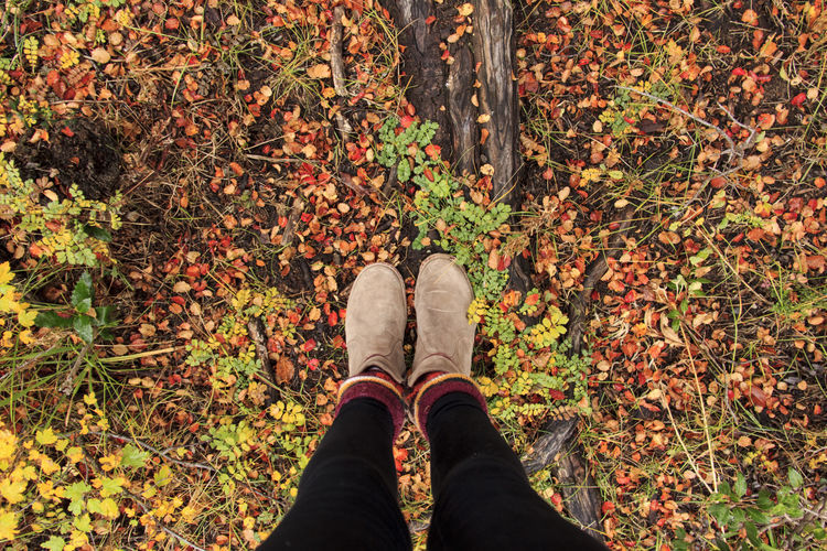 Low Section Of Woman Standing On Field During Autumn