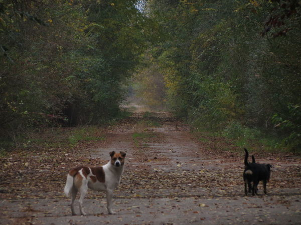 Come with us Fairytale  Fall Colors Animal Themes Day Dog Dogs Posing Domestic Animals Domestic Cat Feline Forest Mammal Nature Nature Bliss No People One Animal Outdoors Pets Portrait Standing Street Dogs Tree Tunnel