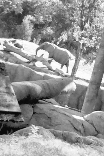 Elephantlove Elephant ♥ Dallas Zoo EyeEm Nature Lover Exploring Worlds Habitats