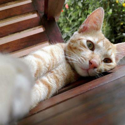 "Cat ""stolen"" selfie ;) Meow Cats Meow🐱"