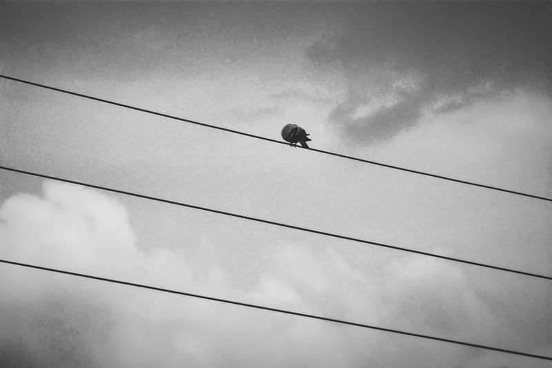 Simple composition Welcome To Black Dove Transmission Line Blackandwhite Photography Silentblackphotography Birdlove