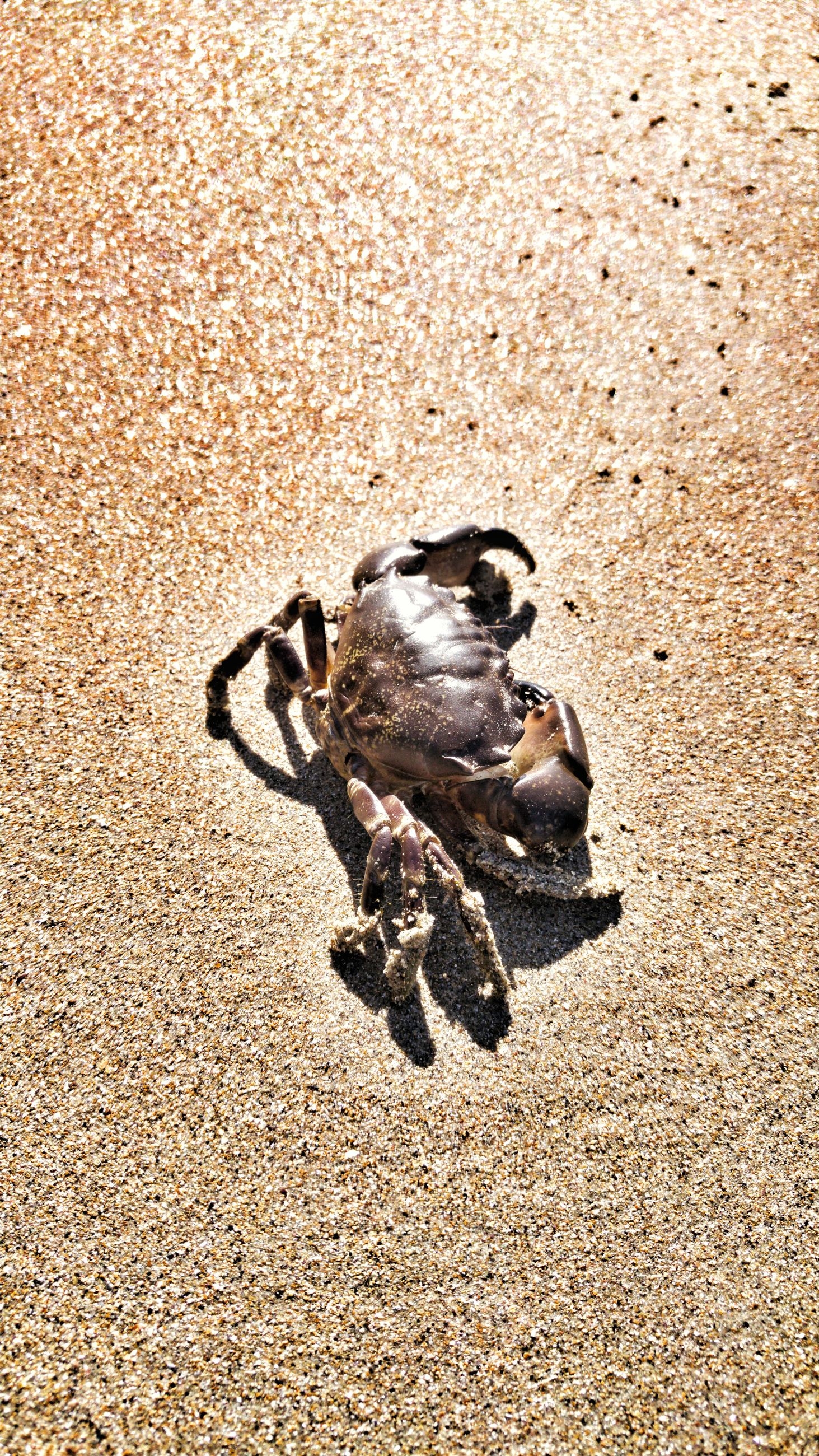 sand, beach, no people, animal themes, shadow, sunlight, day, outdoors, nature, one animal, mammal