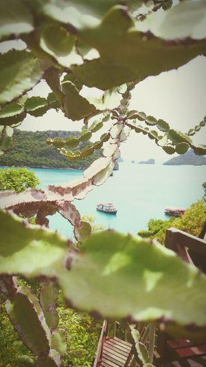 Thailand Koh Samui Cereus Hello World Enjoying Life First Eyeem Photo