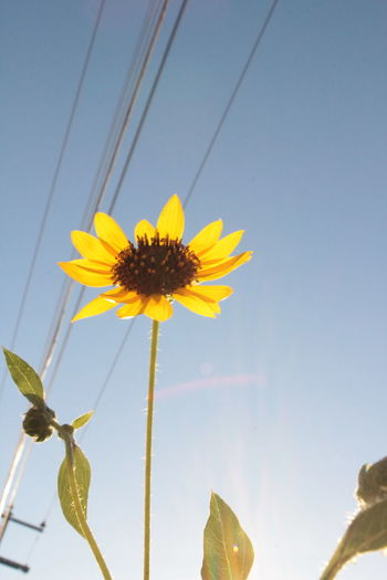 Photo taken in Hermosillo, Mexico