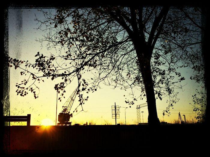 Harbor Kranes Morning Sunrise