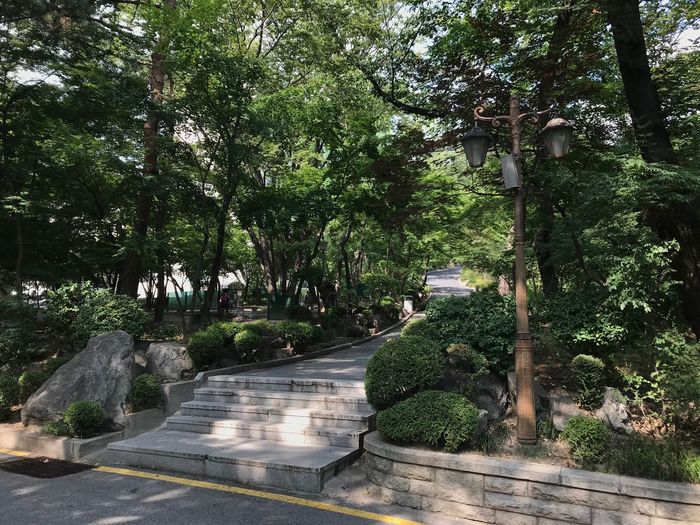 Plant Tree Growth Green Color Nature Day Park Plant Tree Growth Green Color Nature Day Park No People Park - Man Made Space Tranquility Footpath Outdoors Beauty In Nature Garden Street Tranquil Scene