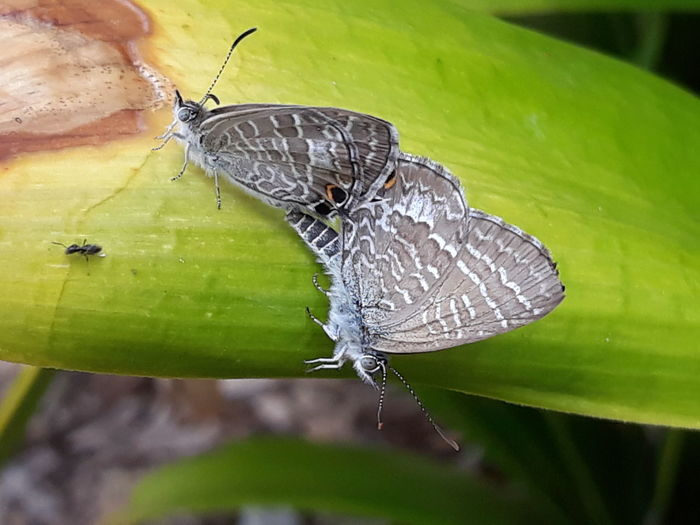 Perching Full Length Leaf Butterfly - Insect Insect Conformity Macro Close-up Animal Themes