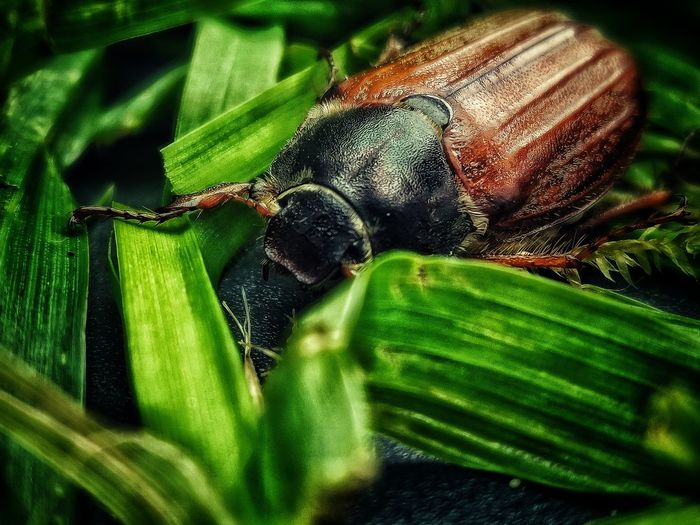 Oneplus Oneplusphotography HDR Hdr_Collection Wildlife Macro Macro Photography Macro_collection Taking Photos EyeEm Best Shots EyeEm Nature Lover EyeEm Gallery EyeEm Selects EyeEm Masterclass Outdoors Nature Detail Leaf Insect Close-up Animal Themes Green Color Bug Tiny Animal Antenna