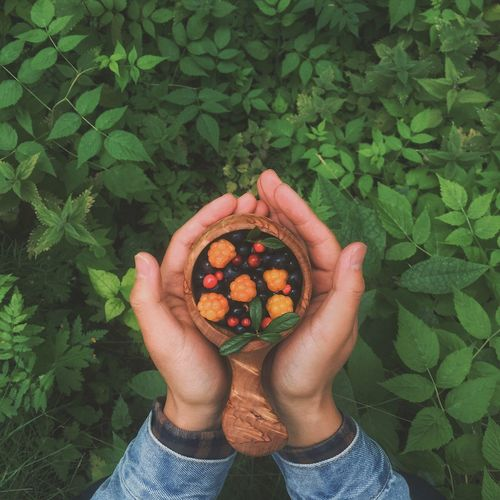 Cropped hands of person holding berry fruits in wooden bowl over plants