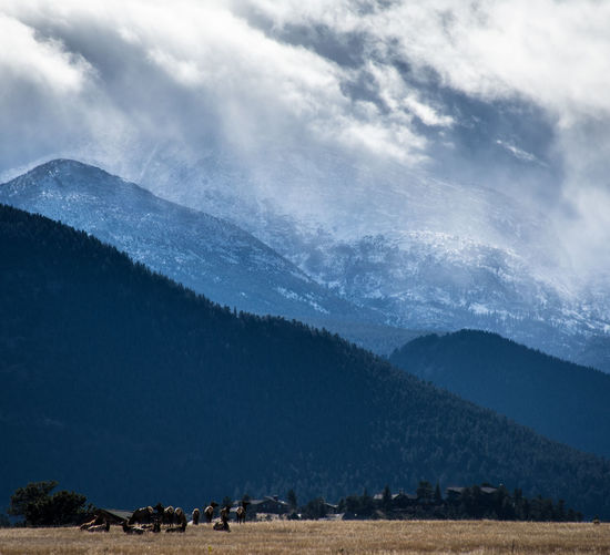 Why elk are smarter than us... Biggerphotography Elk Estes Park, CO Majestic Mountain Mountain Range Nature Scenics