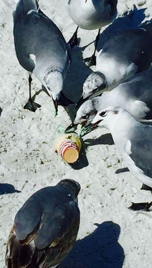 Seagul, Beach,Florida