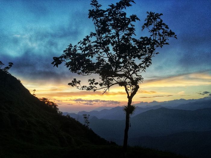 a beautiful sunrise in the middle of a cold embrace and surrounded by good. Summer Exploratorium Nature Nature_collection Colombiamagiasalvaje Mountaingede Photography Sierra Nevada EyeEm Selects Nature Photography Discovery Tree Mountain Sunset Rural Scene Tree Area Silhouette Sky Landscape Cloud - Sky