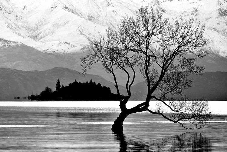 Tree Plant Lonely Tree Lonely Lonelyplanet Wanaka Wanakalake Wanaka Tree Newzealand