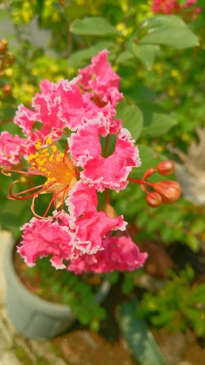 I like this so i took a picture of this flower along the street .. :-) Pink Color Flower Beauty In Nature