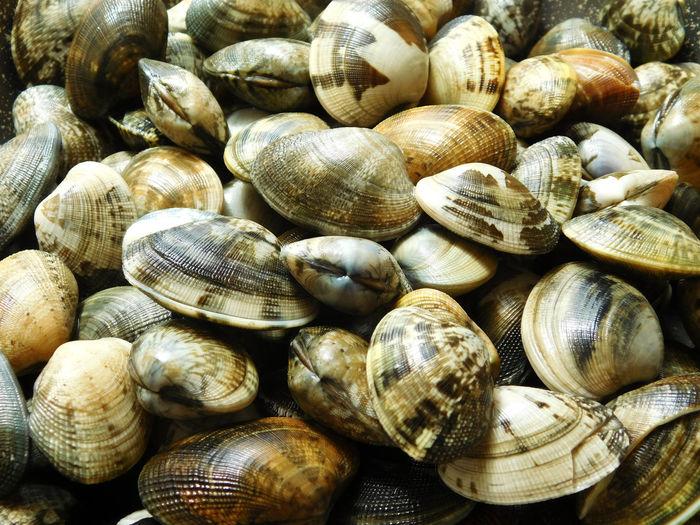 Full frame shot of mussels